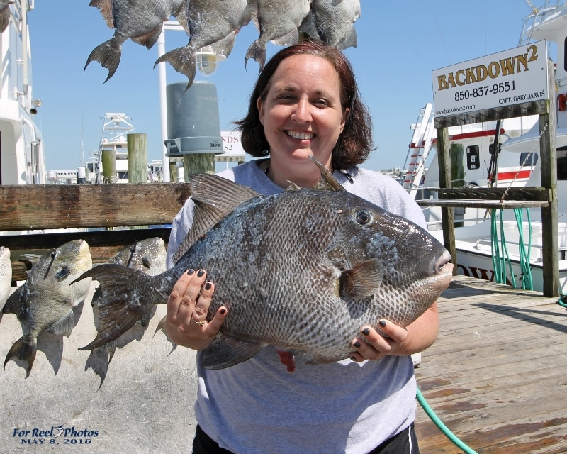 Mingo king macks more action on the gulf destin fl for Destin shark fishing
