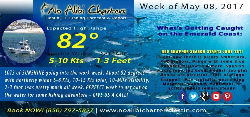 No Alibi Destin Fishing Charters in the AJs 2016 Cobia Spring Fling